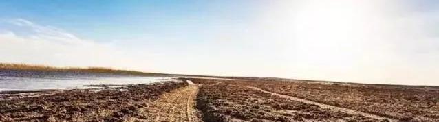 土壤修复专题